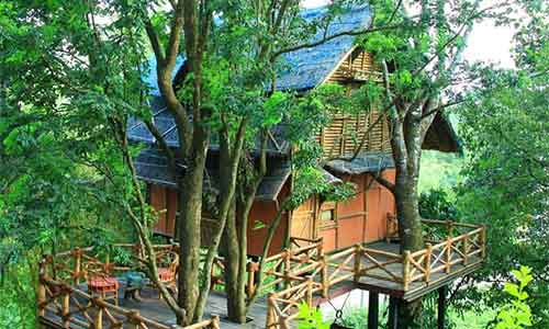 Wayanad Tour Packages,Best Tour Operators In Kerala